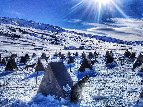 Husky Snow Cold Temperature Winter Nature Beauty In Nature Baqueira BaqueiraBeret Mushing