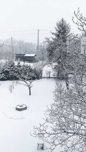 Winter Wintertime Winter Wonderland View Window View White Snow Snowy Snowing Snow Covered Snow Day Garden Trees Tree Tree Branches Weather Condition Frozen Cold Temperature Covering Cold Season  Snowfall Weather Frost