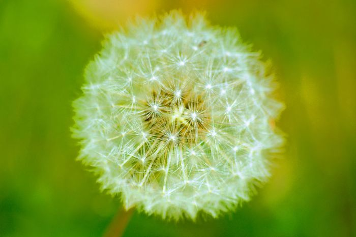 Flower Dandelion Nature Uncultivated Fragility Close-up Growth Plant Softness Flower Head Beauty In Nature Wildflower Freshness Springtime No People Outdoors Day Rethink Things The Week On EyeEm The Creative - 2018 EyeEm Awards A New Beginning
