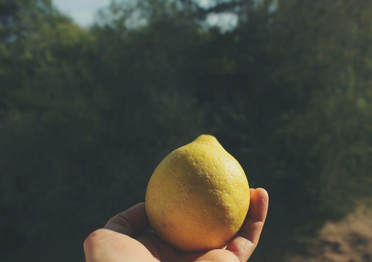 Cropped Image Of Hand Holding Lemon