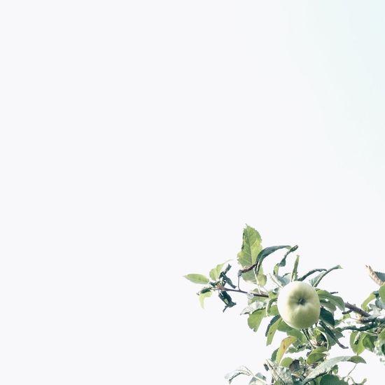 Green apple?