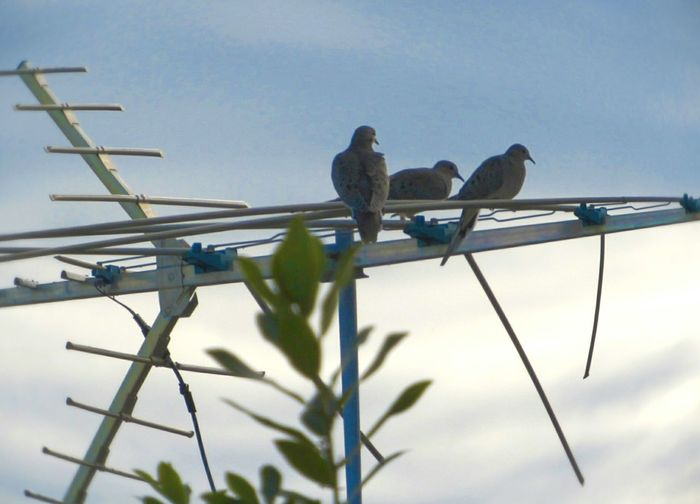 Mourning Doves Bird Photography Birds🐦⛅ Blue Sky TV Antenna Perching Animal Themes Animal Wildlife Animal Photography No People Bird Nature