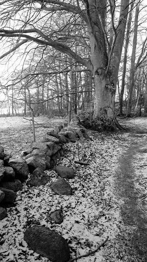 Walking Around January2016 Skåne