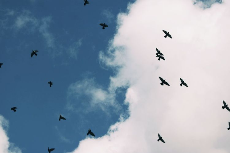 Flying Bird Sky Cloud - Sky Low Angle View Outdoors Animal Themes No People Day