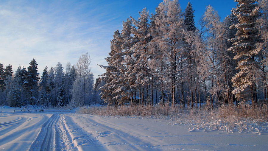 Ski Track Winter Winter Wonderland Snowmobile Tracks Tracks In Snow Scenery Day Blue Sky Lake View Snowy Tree Pine Tree Winter Day Snow Sky Cold Temperature Outdoors Nature No People Blue Scenics Beauty In Nature Freshness Shades Of Winter