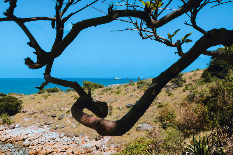 Through the branches Beach Beauty In Nature Blue Branch Day Landscape Nature No People Outdoors Scenics Sea Ship Tranquil Scene Tranquility Tree Tree Trunk Water