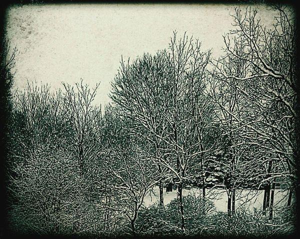 Winter Still Life