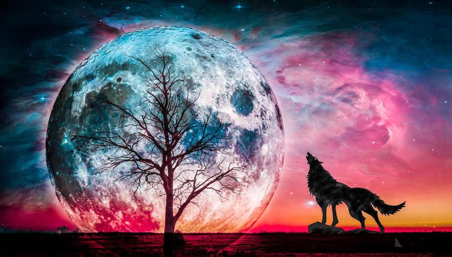 Fantasy landscape - Howling wolf and bare tree silhouettes with huge planet rising behind and galaxy in the sky. Elements of this image furnished by NASA Alien Landscape Astronomy Fantasy Fantasy Edits Galaxy Howling Howling At The Moon Landscape Nature Night No People Outdoors Planet Earth Sky Space Star - Space Wolf