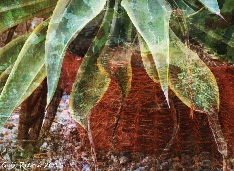 Potted cactus. Cactus Desert Digital Expression, Distressed Rustic, Backyard Vignette,