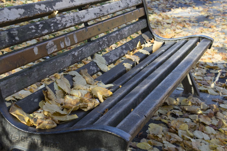 No People Close-up Outdoors Bench Wood Absence Nobody Falling Leaves Seat Autumn Leaf Nature Day Focus On Foreground Change