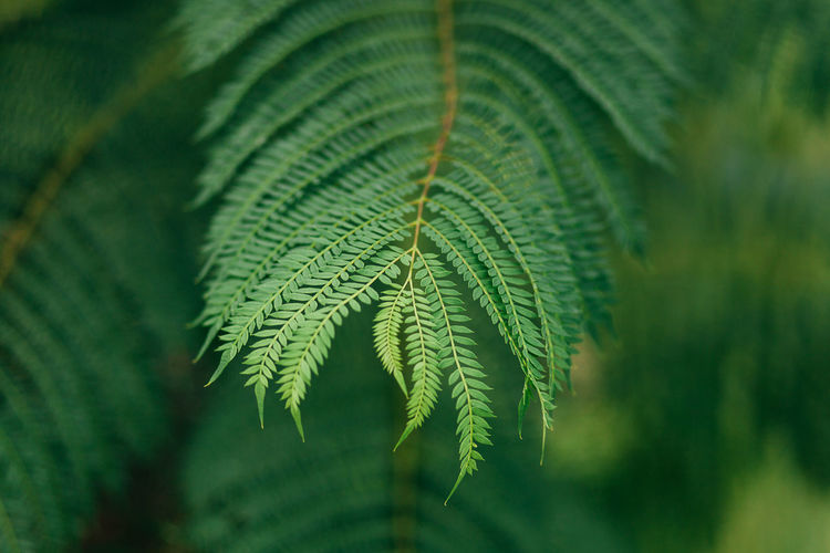 Backgrounds Beauty In Nature Close-up Day Fragility Freshness Green Color Growth Leaf Leaf Vein Leaves Nature Nature Nature Photography Nature_collection Naturelovers No People Outdoors Plant