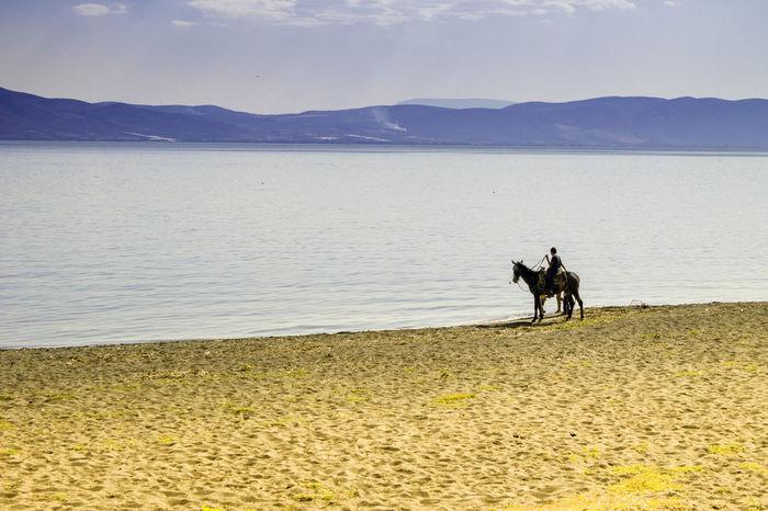 The man the horse and the lake Horse Lake View Lake Lakeshore Horse Riding Horses Horseback Riding Jalisco Chapala Chapalalake Ajijic Mexico