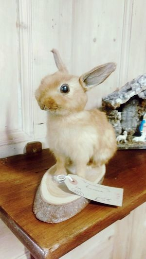 Taxidermy Rabbit Weird Mrwibbles Bunny  Thumper Watershipdown Brighteyes  English English Countryside Boho Antiques Antiques Market Oddities Excentric Portrait Close-up One Animal Vintage Collectable Hunt Lucky lost dreams