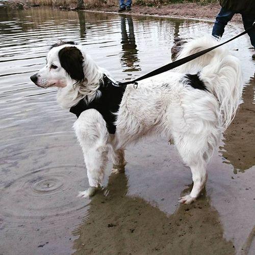 Dog Familie Member Hund Familienmitglied Nature
