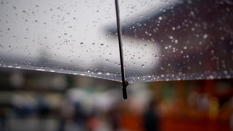 Close-up of wet umbrella