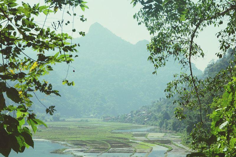 BaBe Lake, VietNam. So peaceful ♡
