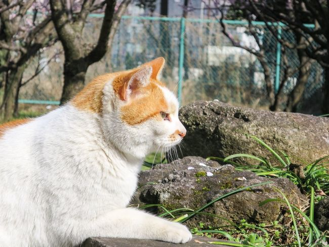 Stray Cat Cat Watching Cat Animals Cat Lovers Catsagram at Minatoku 芝公園 in Tokyo Japan