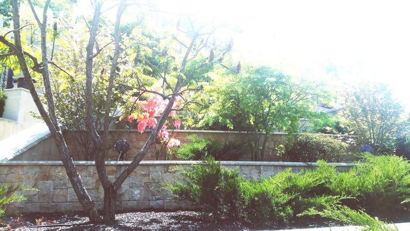 Springtime Trees Park Sunshine Goodday Flowers Secret Garden