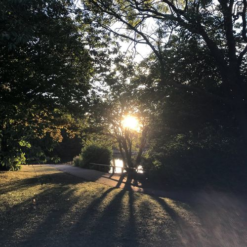 Sun and shadows Tree Sunlight Plant Nature Shadow Sky Real People Beauty In Nature Outdoors Sunset Walking Tranquility Sun Transportation Two People Lifestyles Road Growth Men Lens Flare