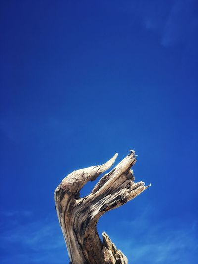 Low angle view of driftwood against blue sky