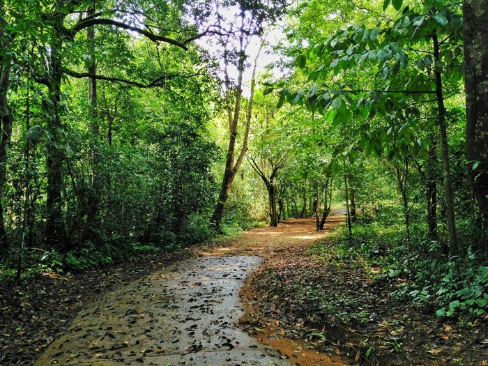 The way forward into the forest Tree Forest Tranquility Tree Forest Tranquility Tranquil Scene The Way Forward Tree Trunk Growth Scenics Nature Non-urban Scene Green Color WoodLand Beauty In Nature Dirt Road Footpath Plant Lush Foliage Day Outdoors Take Over Contrast Picturesque India