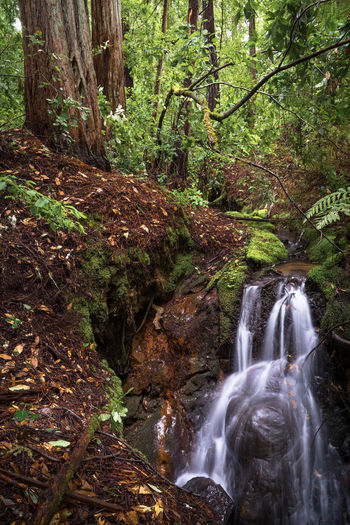 Creek Falls and