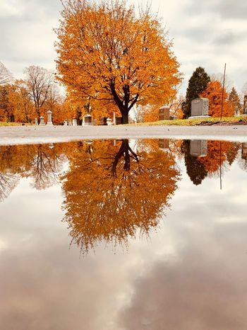 Puddle Reflection Sky Water Symmetry Tree Waterfront Lake Nature Cloud - Sky Orange Color Tranquil Scene Beauty In Nature Outdoors