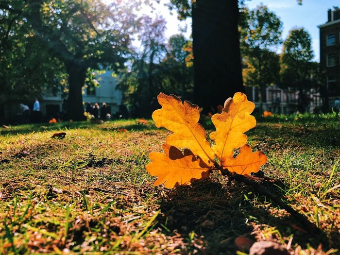 Autumn's here! Plant Tree Nature Autumn Growth Plant Part Leaf Day Change Beauty In Nature Outdoors Grass Sunlight Close-up