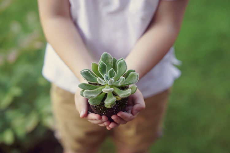 Midsection of child holding plant on field