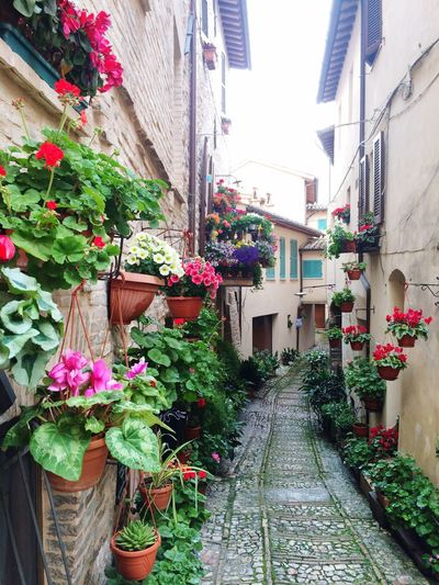 Italy Beautifulview Flowers Colorful Lastsunday Walkingaround  Umbria