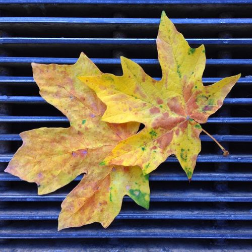 IPS2015Fall IPhoneography Leaves Yellow Grate Fall Autumn IPS2016Stilllife