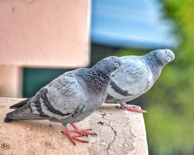 Love Birds....