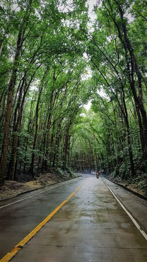 A well organised man made time spent among tress is never been wasted as beautiful as tress to look at. It's been always refreshing. Trees Beautiful Spots The Way Forward Road Growth Day Outdoors Nature Green Color Beauty In Nature