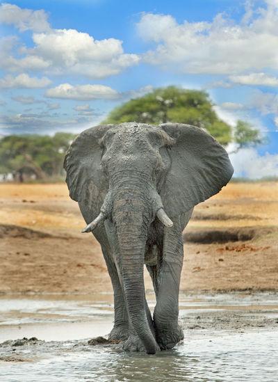 Elephant Against Sky