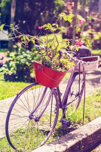 Bike Nature Flower Nature Photography Lifestyles Beauty In Nature Tranquility Places Bicycle Outdoors Transportation Day No People Front Or Back Yard Plant Close-up first eyeem photo Be. Ready.