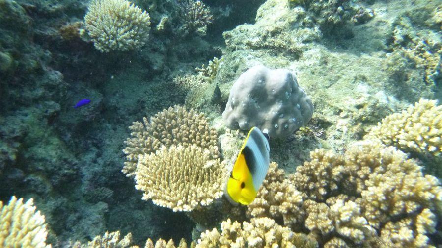 Sea Animals In