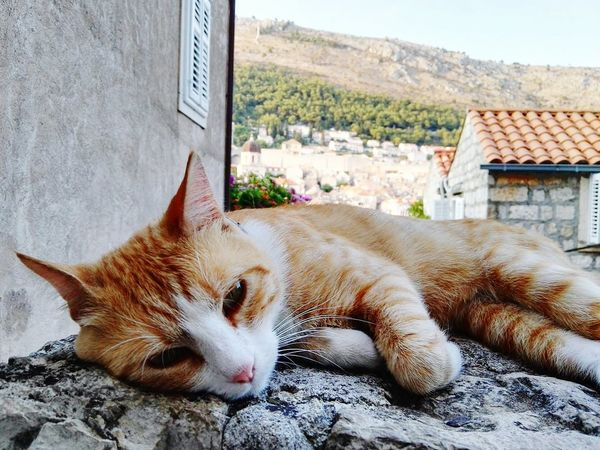 Cat Sleeping Wake Up Animal Mammal Looking At Camera Outdoors Relaxation Croatia Dubrovnik The Great Outdoors - 2016 EyeEm Awards