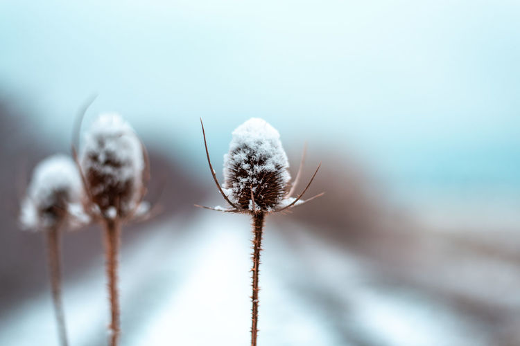 Plant Close-up Beauty In Nature Selective Focus No People Nature Focus On Foreground Invertebrate Flower Day Insect Cold Temperature Winter Fragility Animal Animal Themes Growth Flowering Plant Animal Wildlife Snow Blue Background