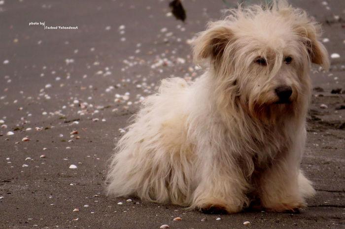 Dog Dogslife Iran Iran Street Photography Beach Beach Guilan Guilan 😊💝😏 Good Night بندر_انزلي گیلان Canon Sx50 Canon