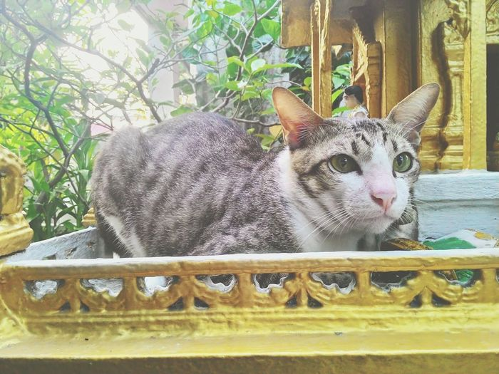 Just take a pic dudee , relaxx. Thai Cat Cat Catsagram Cats