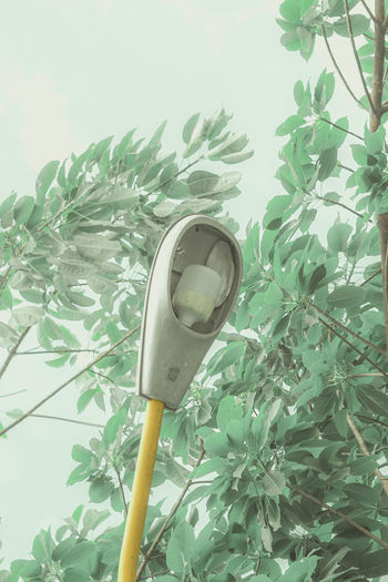 Low angle view of telephone pole against plants