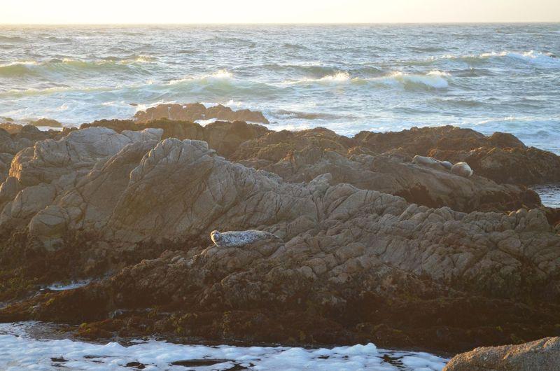 Beauty In Nature Cliff Coastline Day Horizon Over Water Idyllic Nature No People Non Urban Scene Non-urban Scene Ocean Outdoors Remote Rock Rock - Object Rock Formation Scenics Sea Seascape Shore Sky Tranquil Scene Tranquility Water Wave