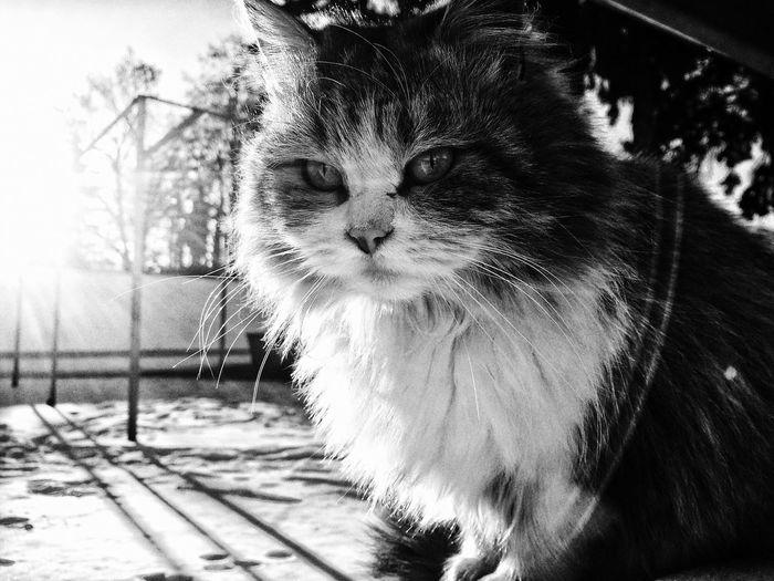 Close-up of cat against sky