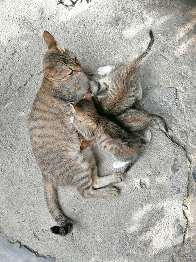Cat Animal Cat Kitten Stray Beach Sand High Angle View Textured  Close-up Paw Print Animal Track