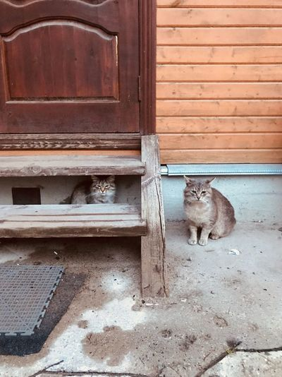 Cats Wood - Material Entrance Door No People Day Architecture Closed Building Exterior Built Structure Safety Outdoors Domestic Animals Brown Old Metal Animal Window House Mammal Domestic