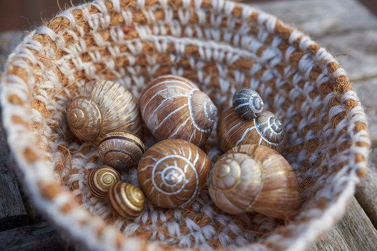 Grapevine snail shells collected at my in-laws site. Hard to stop picking them ;) Close-up No People Selective Focus Shell Snailshell Many Of A Kind Many In A Row Painted Basket Collection