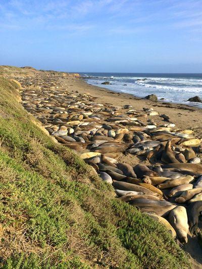 Elephant Seals Highway 1 California Roadtrip Travel Photography Summer Ocean Blue Sky