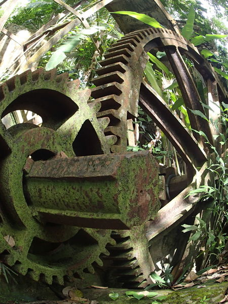 Ancient Close-up Damaged Day Deterioration Green Color Growth History Iron - Metal Low Angle View Machinery Moss Obsolete Old Ruin Outdoors Sugar Mill The Past Tourism Tranquility Travel Destinations Weathered WoodLand St Lucia
