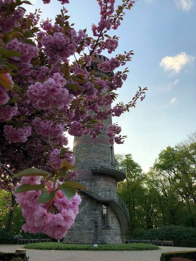 Toelleturm Wuppertal Plant Tree Growth Flowering Plant Flower Nature Sky Park Outdoors Architecture Day Pink Color
