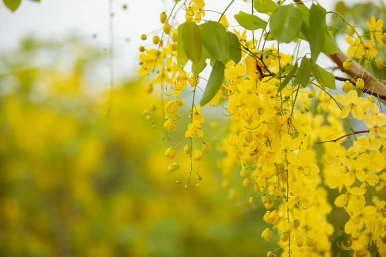 Close-up of fresh yellow flowering plants